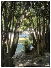 Callosa15_Snapseed